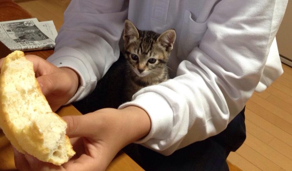 パンが欲しい?