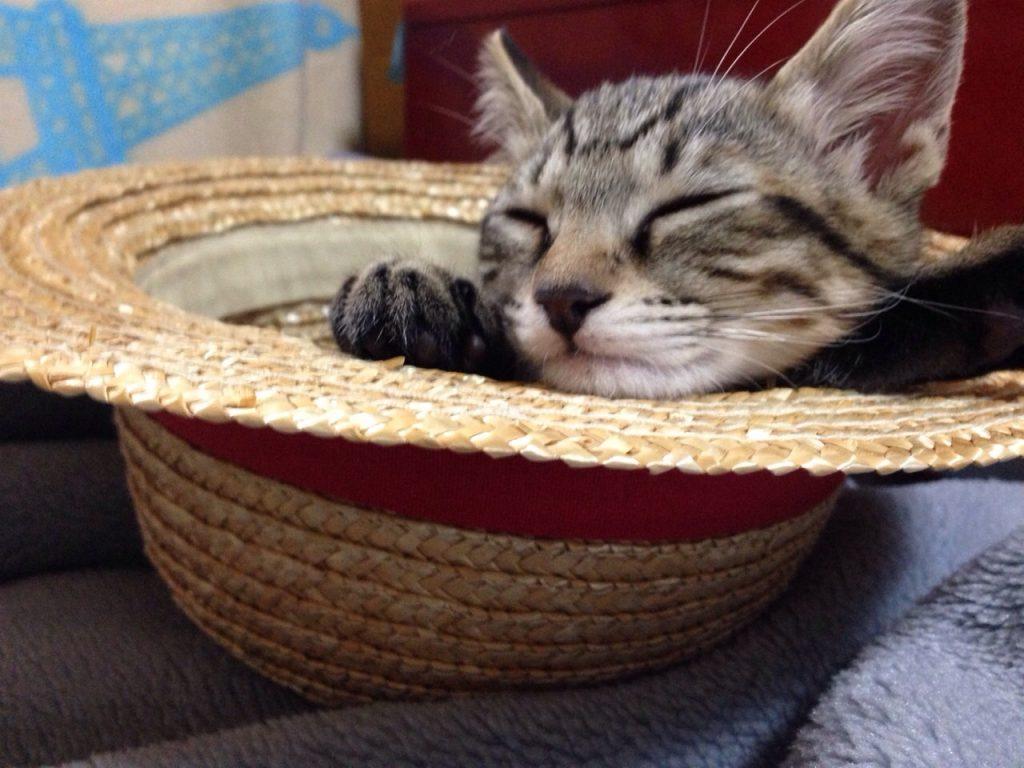 麦わら帽子でお昼寝