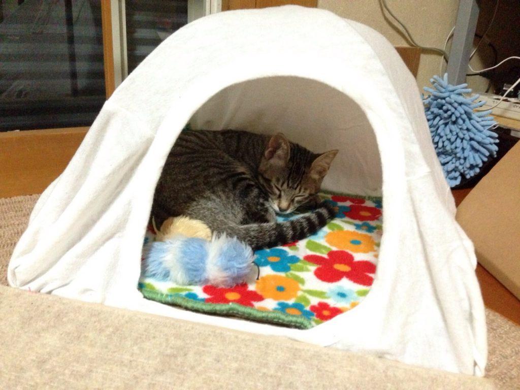 テントでおやすみ