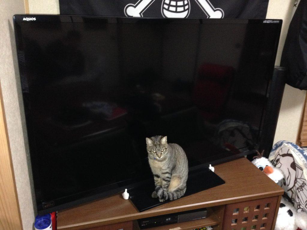 ジャマする猫