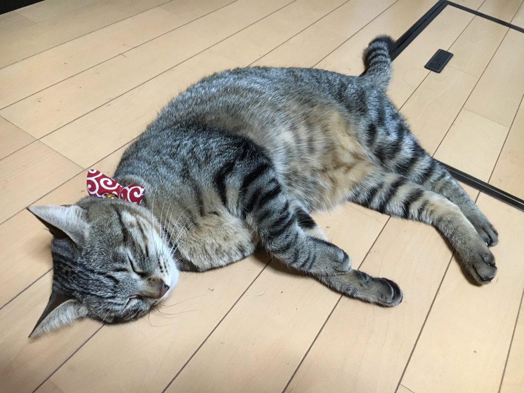 撫でて欲しい猫