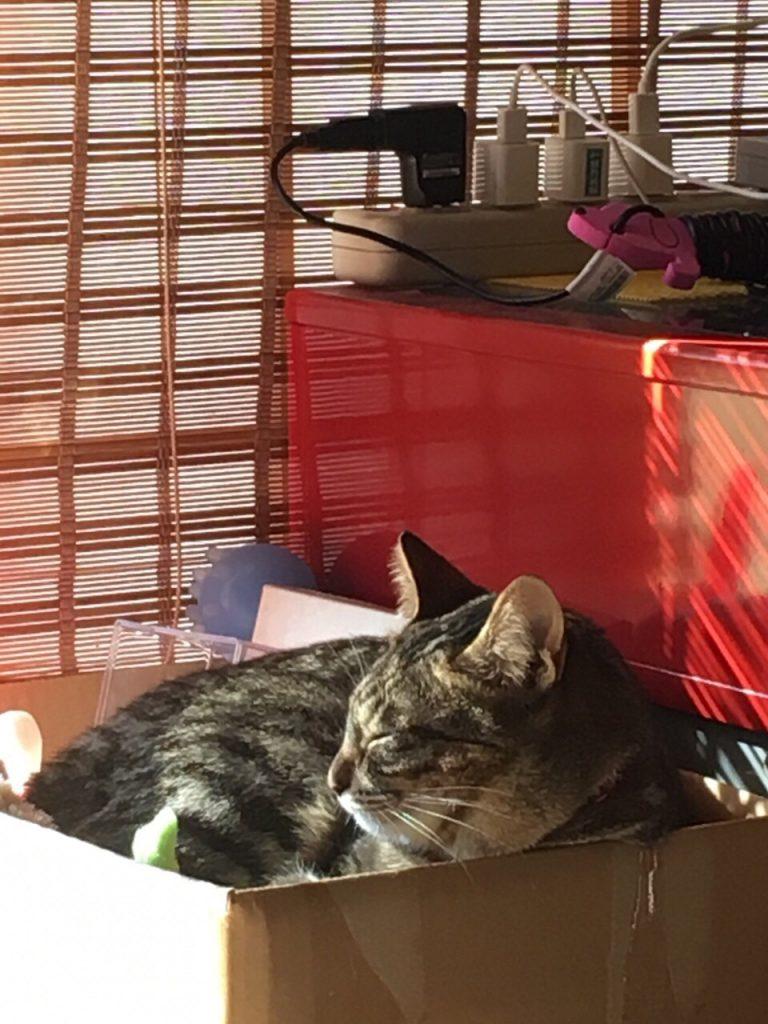 うたた寝猫