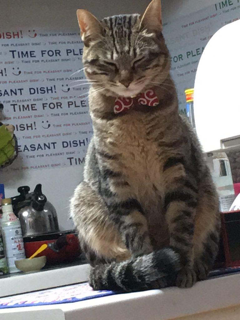 置物のような猫