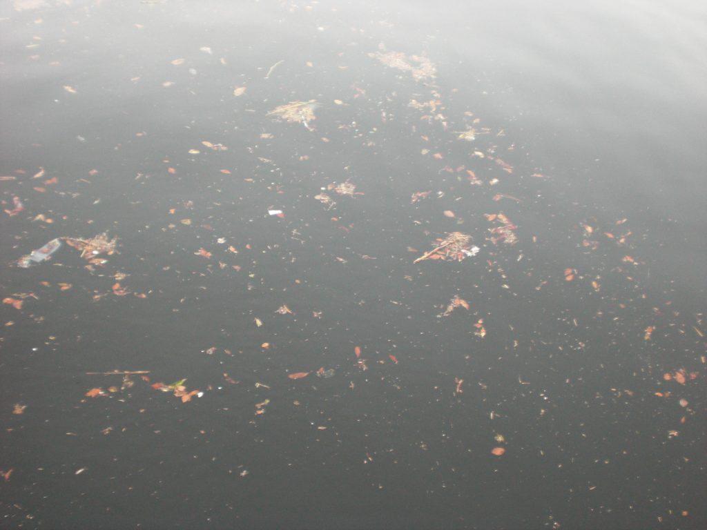 ゴミだらけの海