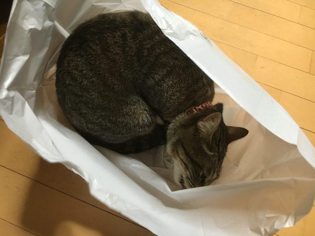 袋を舐める猫