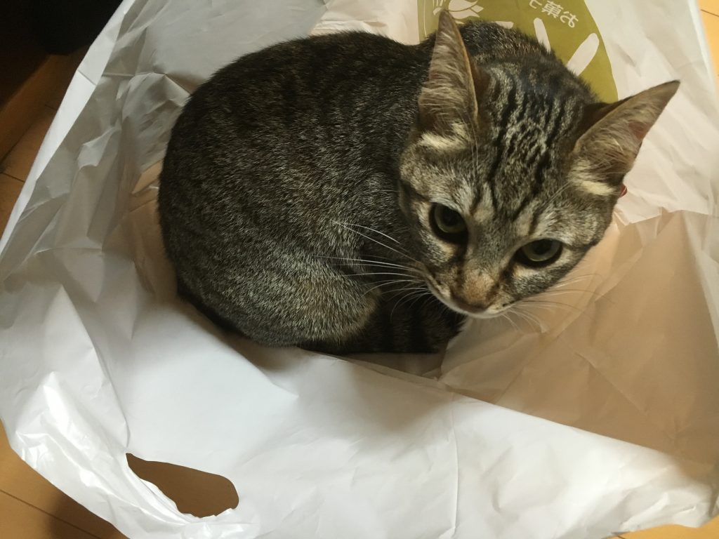 袋の中の猫