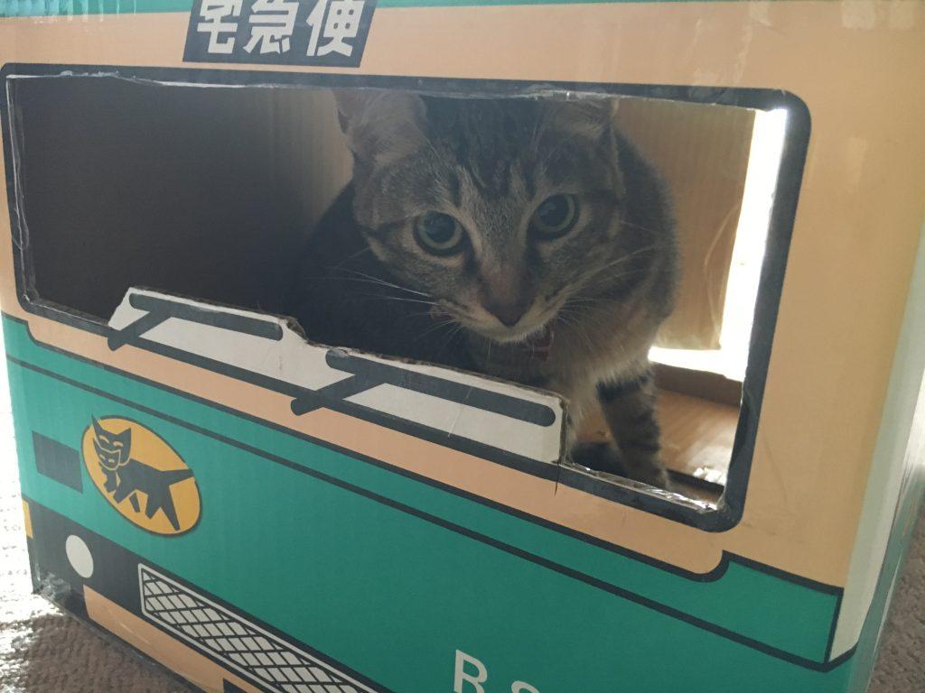 ヤマト運輸の箱