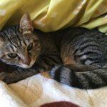 その後の愛猫HANAの様子はと言うと・・。