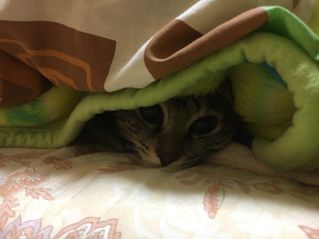 ちょっとだけ顔出しの猫