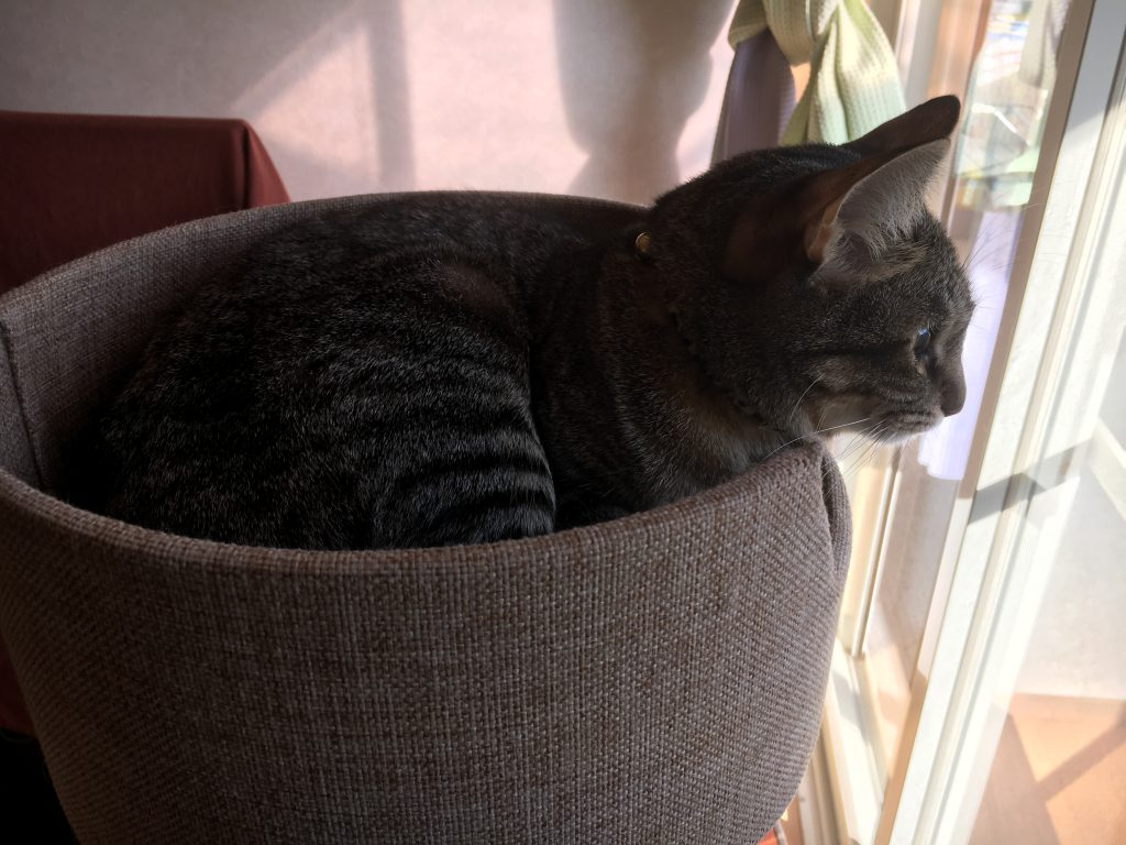 愛猫HANA
