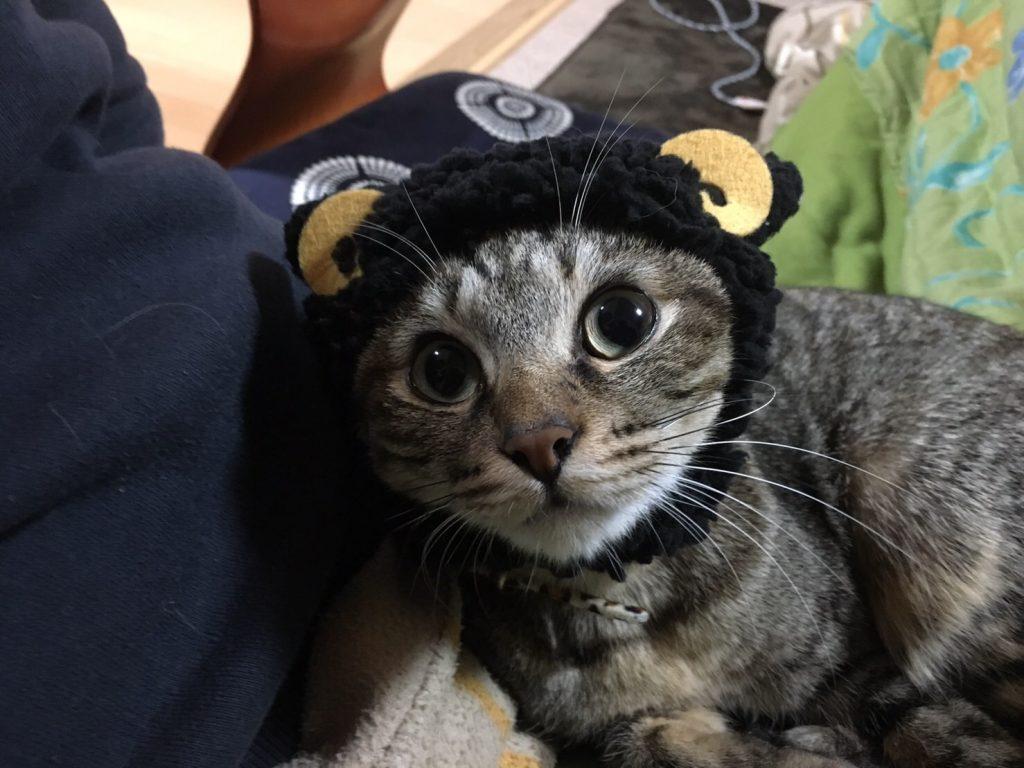 帽子を被ったHANA