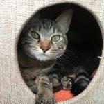 【HANA日記】愛猫HANAとのんびりした日々