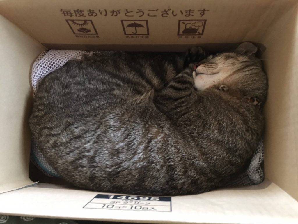 段ボール箱で寝る猫