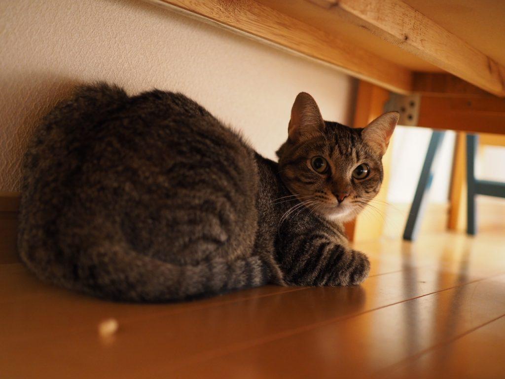 ベッドの下の愛猫HANA
