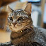 ミラーレスで愛猫HANAを撮ってみるものの