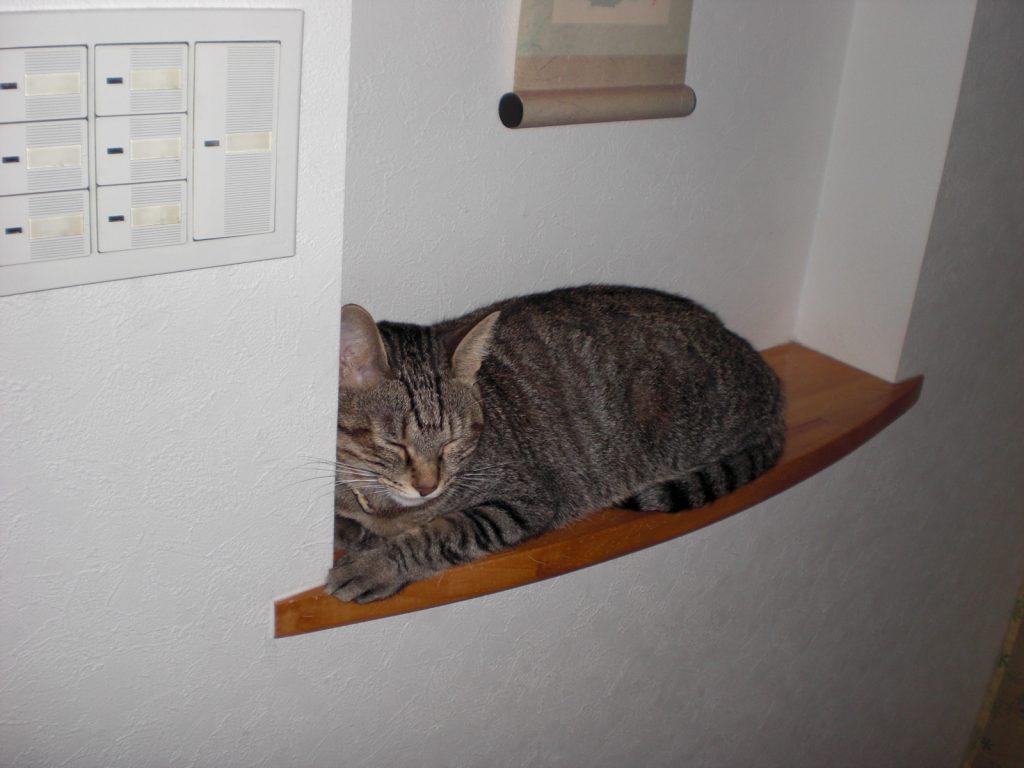 愛猫HANAのお気に入り場所