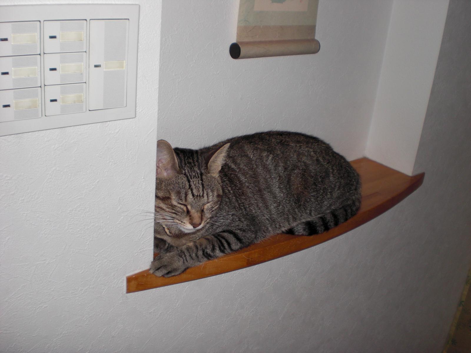 愛猫HANAの粗相とおかしな行動について
