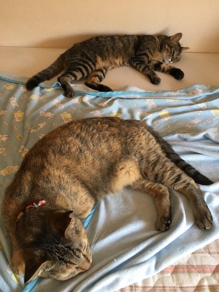 愛猫 HANAとムギ