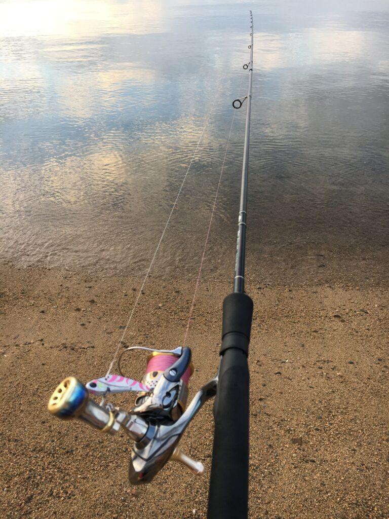 シーバス釣行